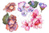Pink Flower Gardenia Png Watercolor Set Flower