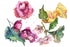 Gardenia Colorful Flower Png Watercolor Set Flower