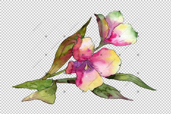 Colorful Alstroemeria Png Watercolor Set Flower