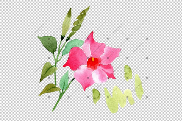 Wildflower Pink Dipladies Png Akvarel Set cvijet