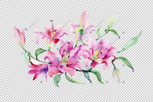 Bouquet Of Pink Lilies Png Watercolor Set Flower