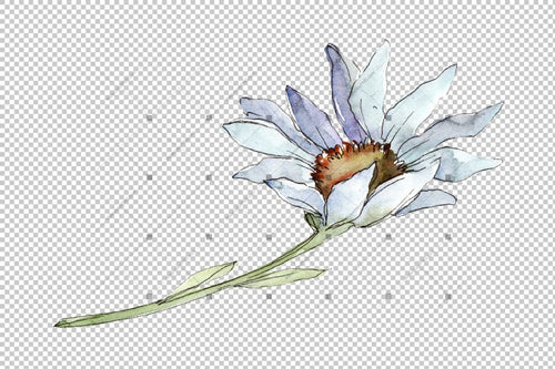 Fine White Daisy Png Watercolor Flower Set Flower