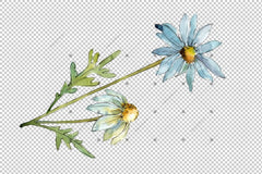 Blue Daisy Png Watercolor Flower Set Flower