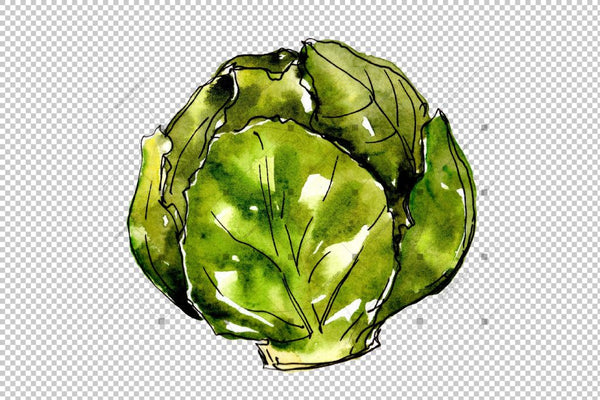 Green Cabbage Vegetables Png Watercolor Set Digital
