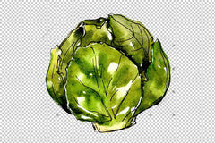 Sayur Sayuran Hijau Hijau Png Watercolor Set Digital