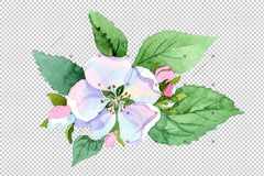 Wildflower Apple Blossom Png Watercolor Set Flower