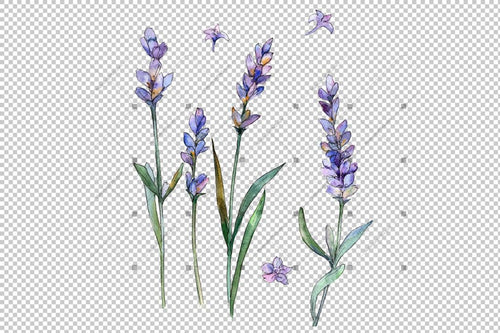 Sweet Purple Lavender Flower Png Watercolor Set Flower