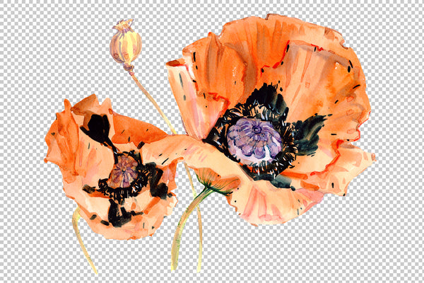 Original poppy red watercolor png