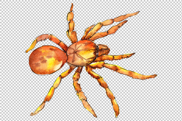 Animal World tarantula watercolor png