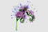 Phacelia Watercolor png