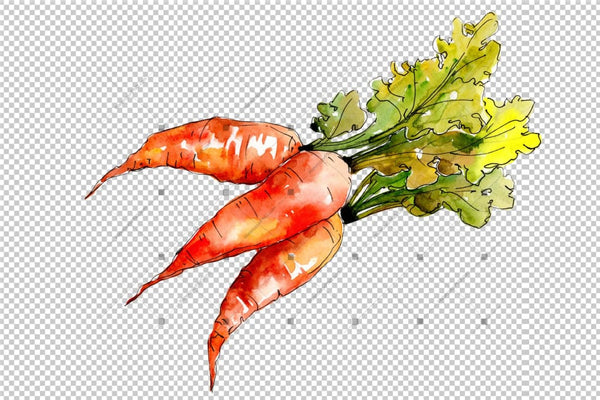 Sayur-sayuran Carrot Orange Orange Png Watercolor Set Digital