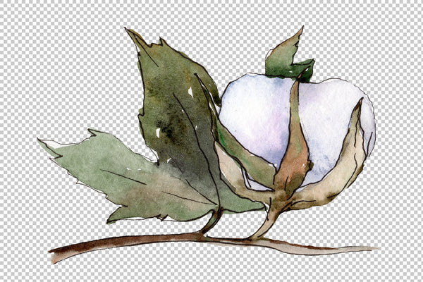 Cotton vegetable watercolor png