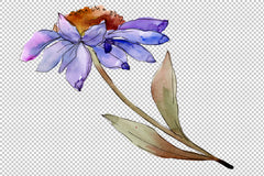 Kulîlka şîn a asters û daisies watercolor png