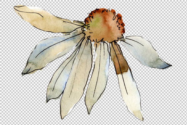 Daisy white watercolor png