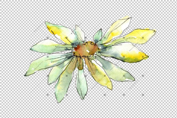 Fine Wildflower Daisy Png Akvarel Set cvijet