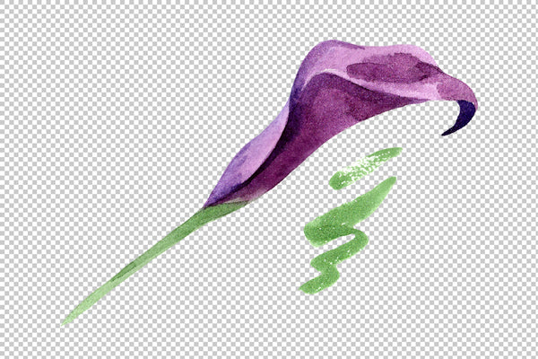 Aquarelle purple callas PNG watercolor set
