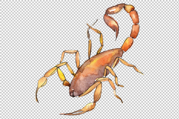Animal world scorpion watercolor png
