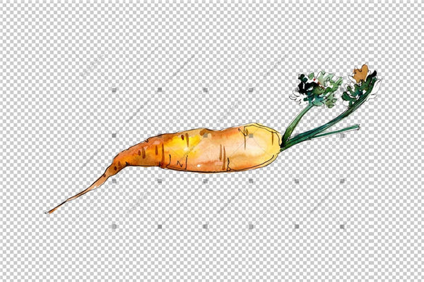 Orange Carrot Vegetables Png Watercolor Set Digital