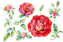 Roses red PNG watercolor flower set