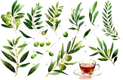 Olives Watercolor Png Clipart Digital