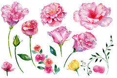 Roses flowers pink PNG watercolor set