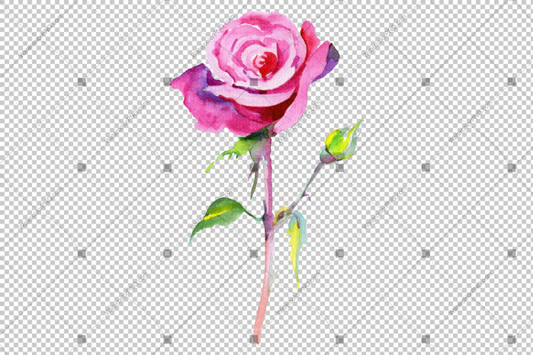 Rose wildflower flower in a hand-drawn watercolor PNG style isolated