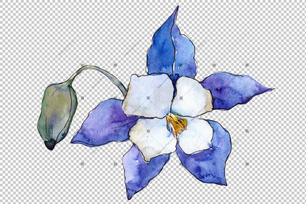 Blue Aquilegia Flower Png Watercolor Set Flower