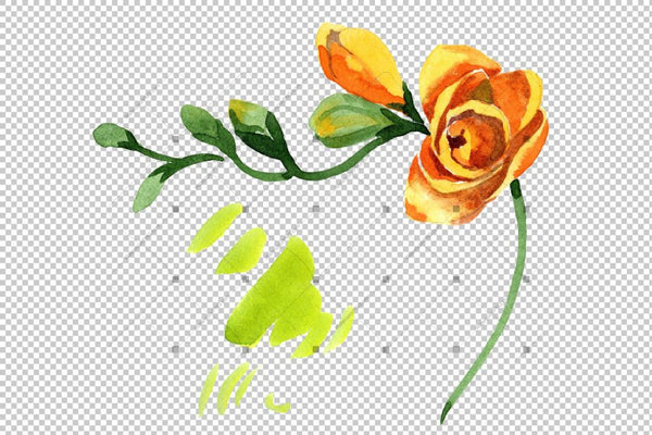 Wildflower Yellow Freesia Png Watercolor Set Flower