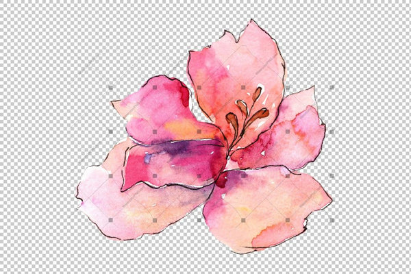 Alstroemeria Pink Flower Png Watercolor Set Flower