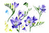Aquarelle Purple Freesia Png Flower Set Flower