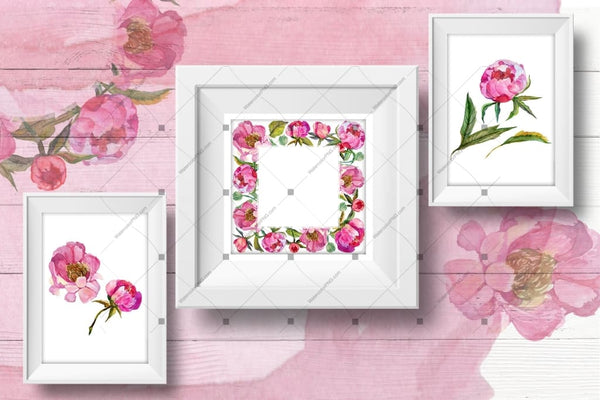 Cool Peonies Png Akvarel Flowers Set Digitalni