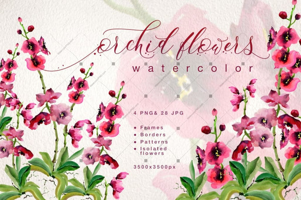 Pink Orchid Flowers Png Watercolor Set Digital