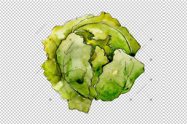 Green Cabbage Vegetables Png Watercolor Set Design