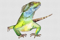 4 iguanas watercolor png
