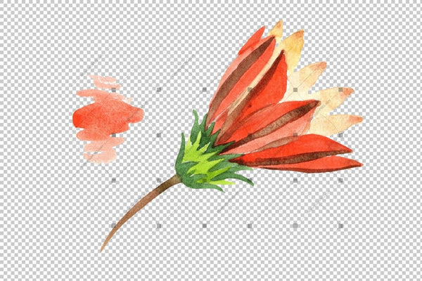 Wildflower Orange Gazania Png Watercolor Set Flower