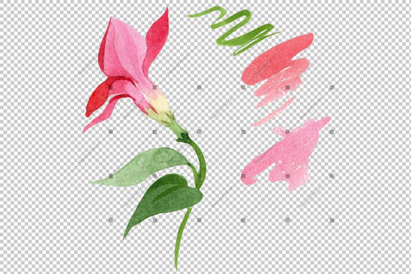 Wildflower Red Dipladies Png Watercolor Set Flower