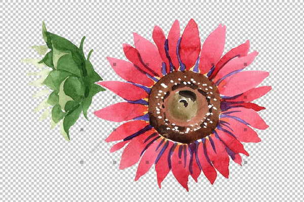 Sunflower Red Flower Watercolor Png Set Flower