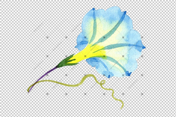 Elegant Ipomoea Blue Flower Png Watercolor Set Flower