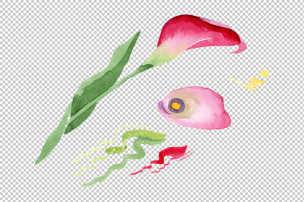 Pink calla flower PNG watercolor set