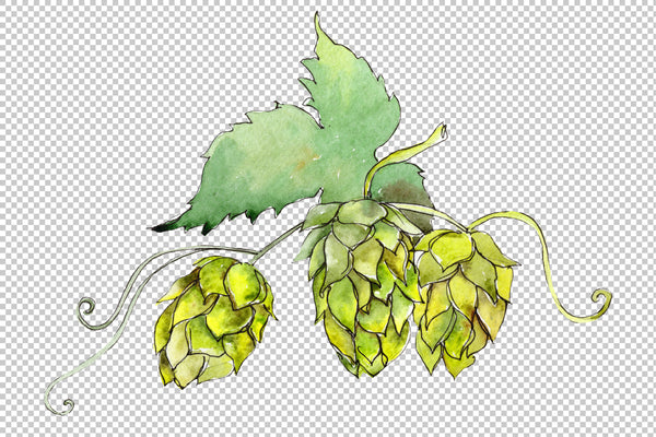 Hops Watercolor png