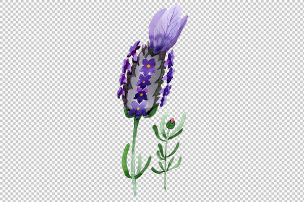 Colorful summer lavender PNG watercolor set