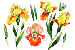 Kuning Irises Watercolor Png Clipart Digital