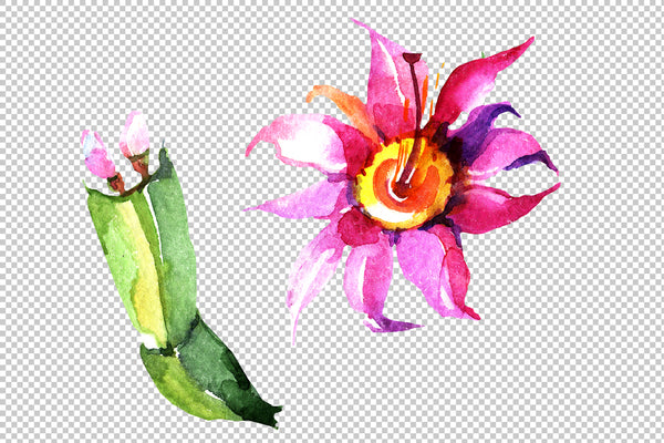 Cacti flower green and pink Watercolor png