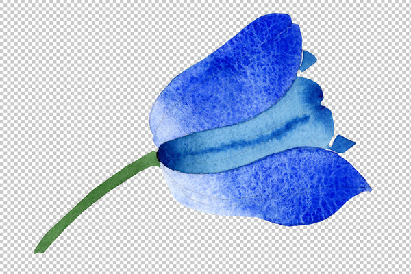 Blue tulip flower watercolor png