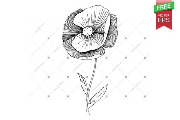 Ink Vector Poppy Free Download Floral Botanical Flower. Wild Spring Leaf Wildflower Isolated. Flower