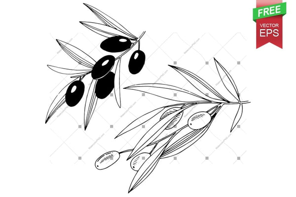 Ink Vector Olive Free Download Floral Botanical Flower. Wild Spring Leaf Wildflower Isolated. Flower