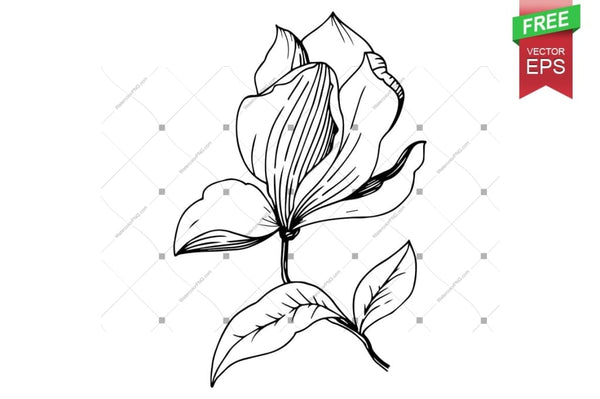 Ink Vector Magnolia Free Download Floral Botanical Flower. Wild Spring Leaf Wildflower Isolated. Flower