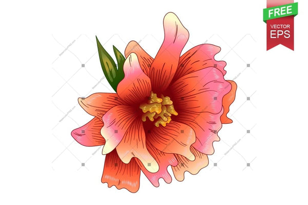 Tinta Vector Peonía Orange Descarga gratuita Floral Botanical Flower. Wildflower de folla de primavera salvaxe isolado. Flor