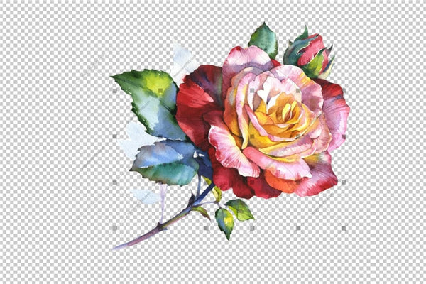 Stunning Big Red Rose Png Watercolor Set Flower