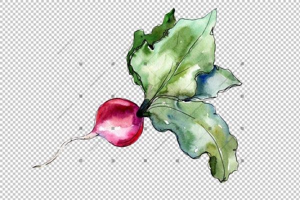 Red Radish Vegetables Png Watercolor Set Digital